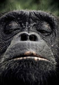 как правильно проводить собеседование с гордыми обезьянами